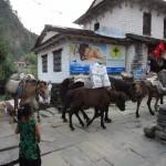 Horse caravan arriving in Birethanti