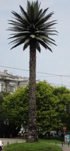Jerusalem Avenue's Palm Tree